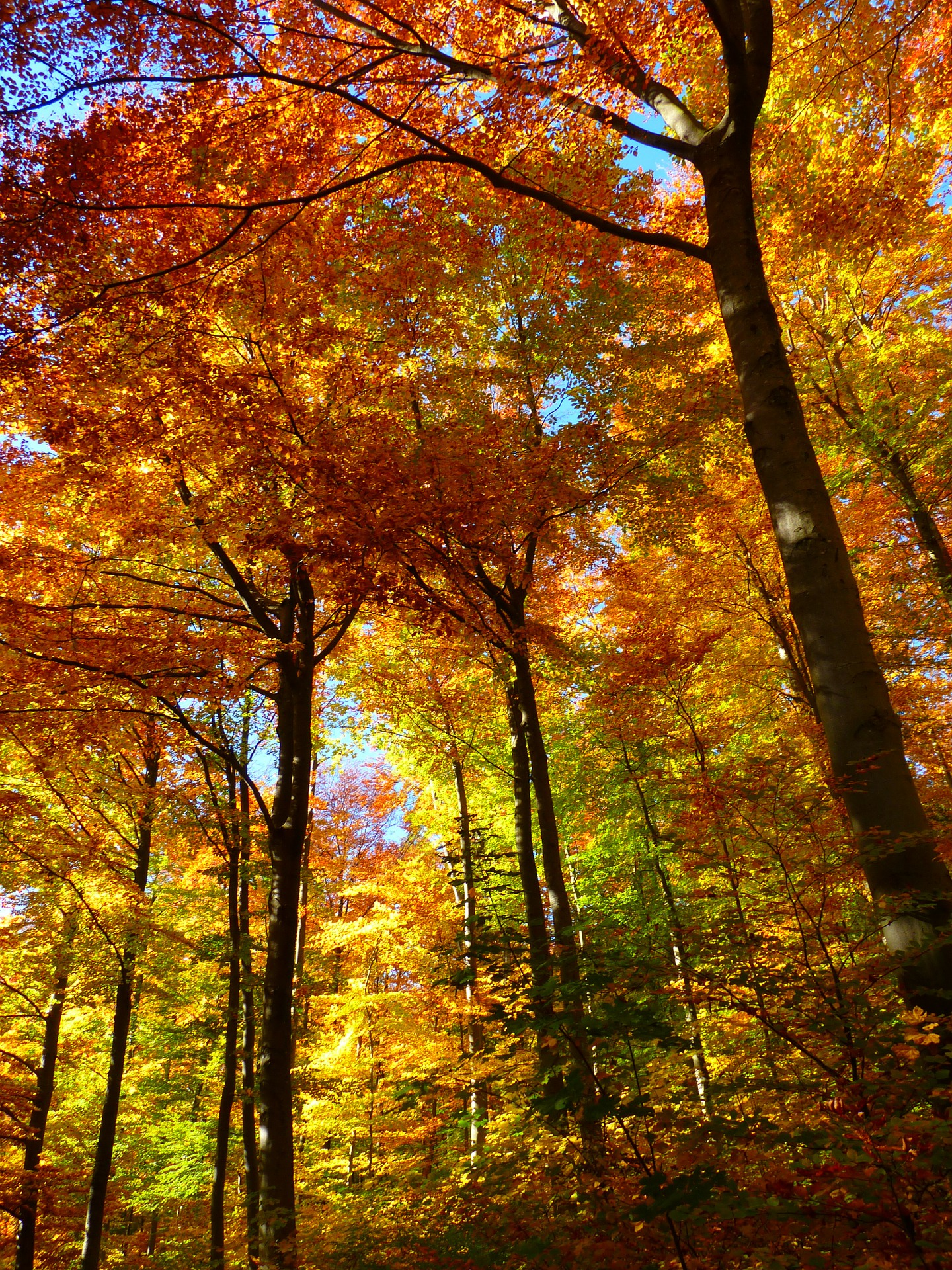 autumn fall leaves trees