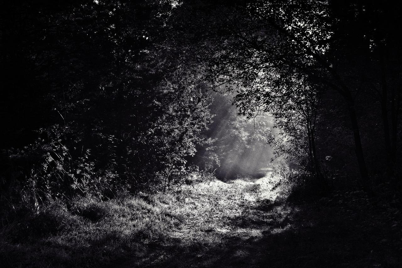 path through woods dark
