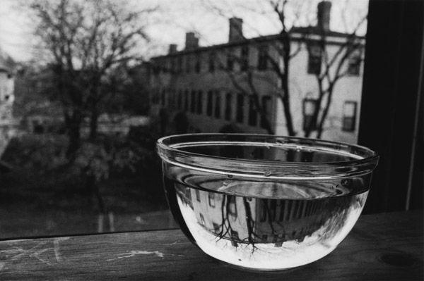 water bowl at window