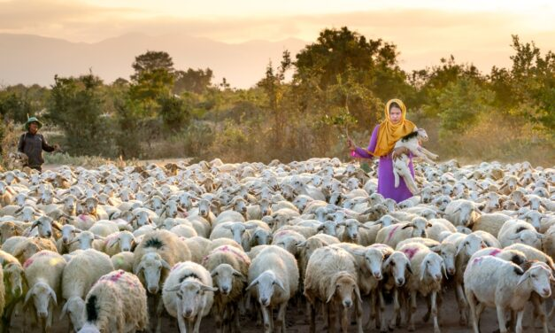 If We Were All Good Shepherds