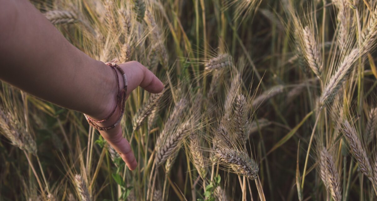 The Weeds and the Wheat: Mindfulness and Non-Resistance